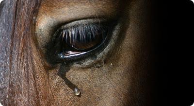 cavalo-chorando