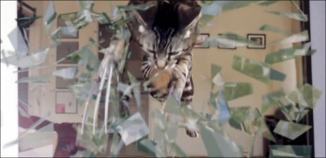 wolverine-cat