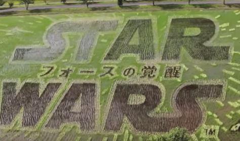 star_wars_rice_paddy