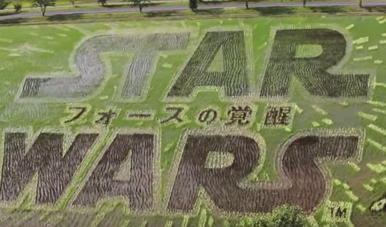 star_wars_rice_paddy